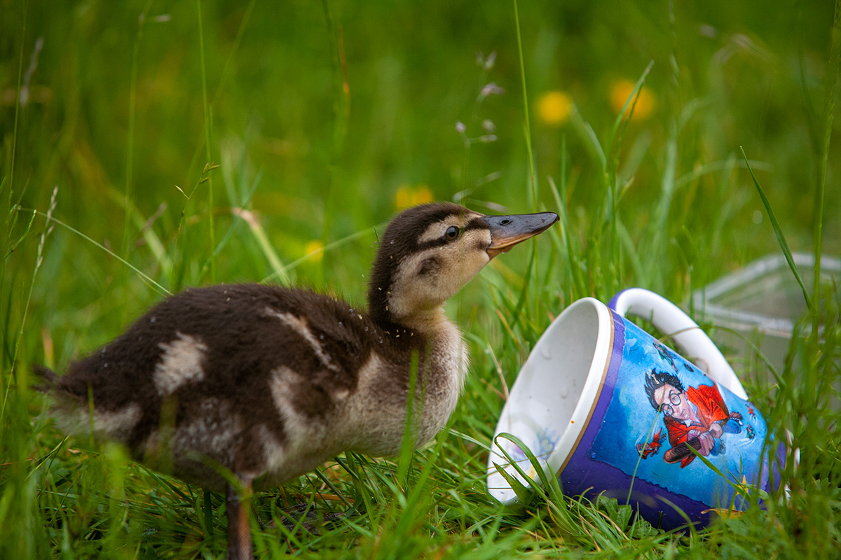 Duck and Potter Mug